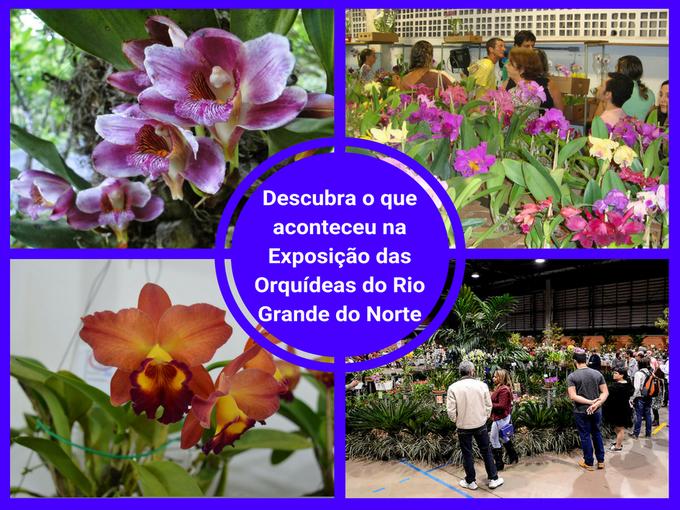 Exposição das Orquídeas jpg
